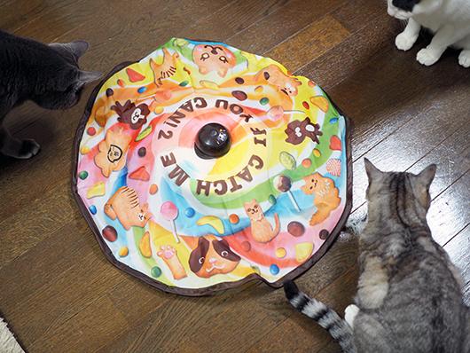 おもちゃを眺める猫