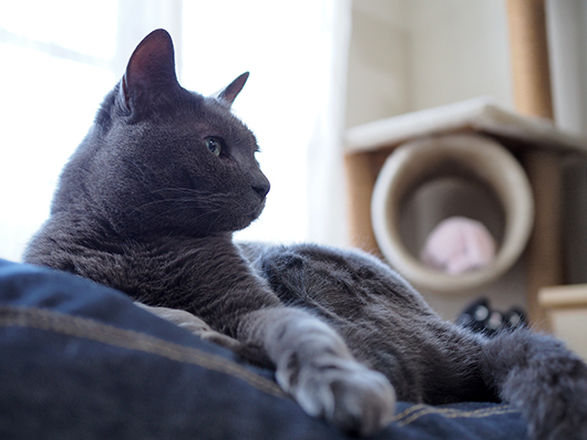 映画を観る猫