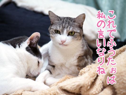 悪だくみする猫