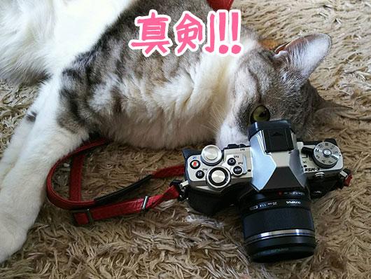 猫のカメラマン