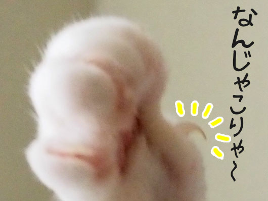 爪が伸びた猫