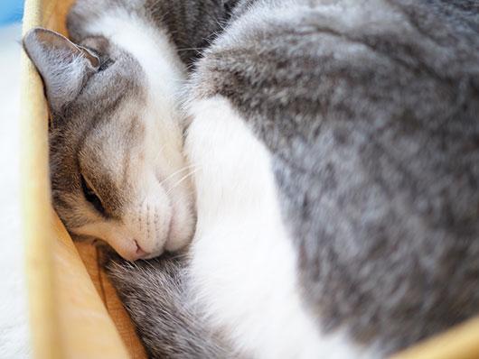 丸まった猫