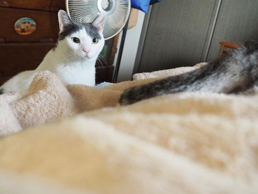 覗きに来た猫