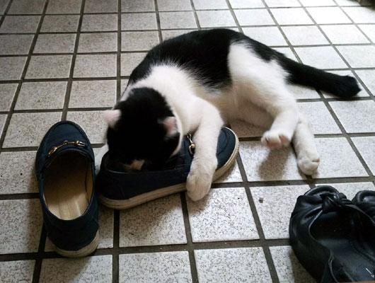 靴の匂いを嗅ぐ猫