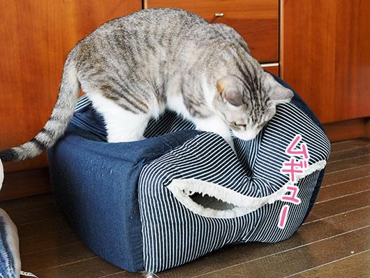 キャットハウスをつぶす猫