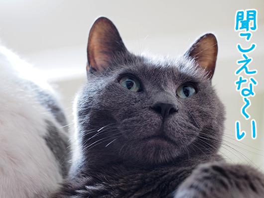 知らん顔の猫