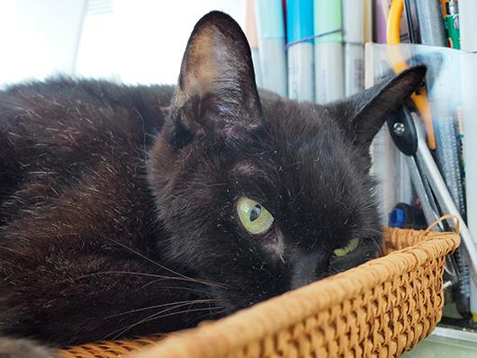 黒猫あかる