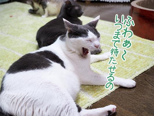 あくびをする猫