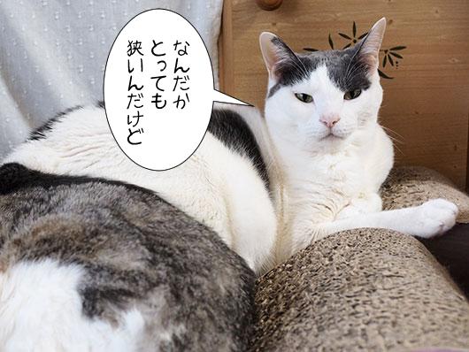 不満を言う猫