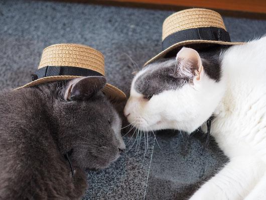 帽子をかぶった猫