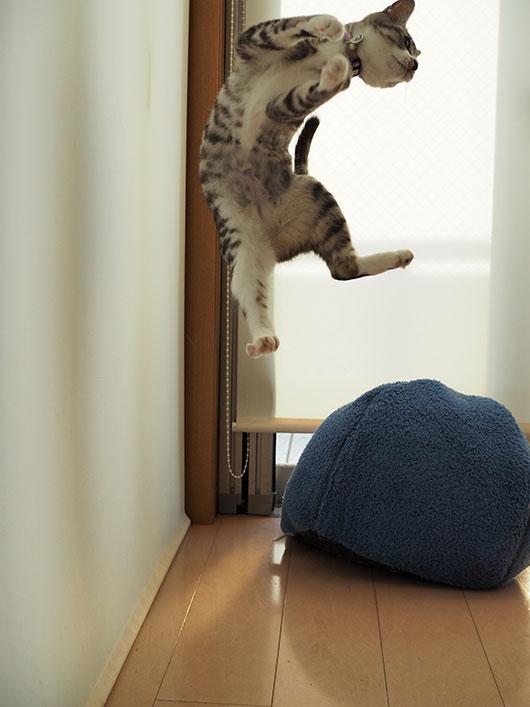 宙に浮く猫