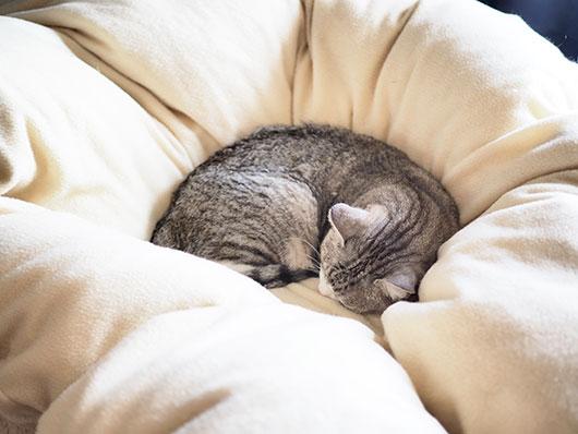 布団に埋もれている猫
