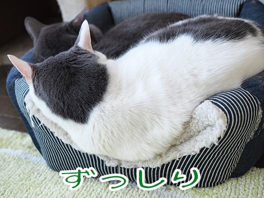 重そうな猫