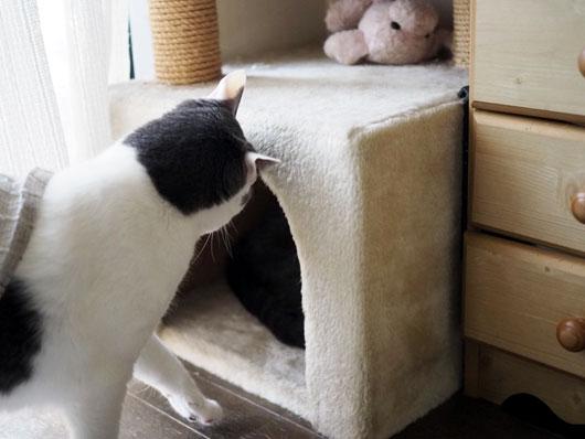 不思議がる猫