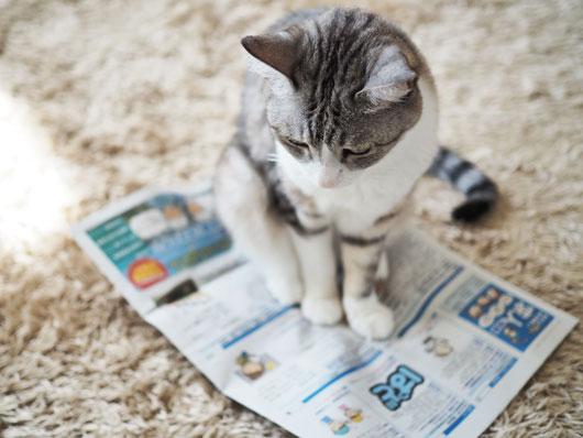 求人誌を眺める猫