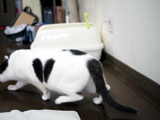 腰が引けた猫