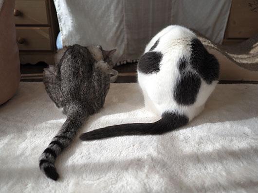 朝ご飯を食べる猫