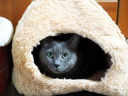 ハウスに入っている猫