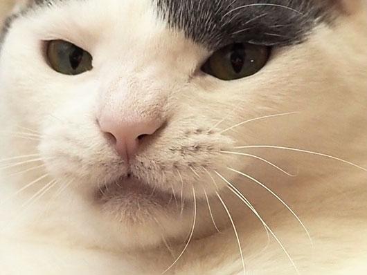やる気の猫