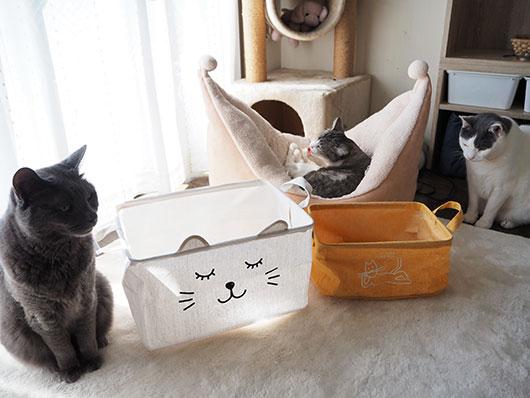 バスケットと猫