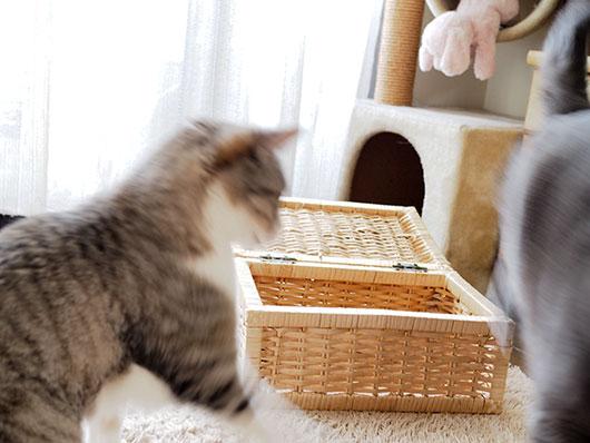 カゴを取り合う猫