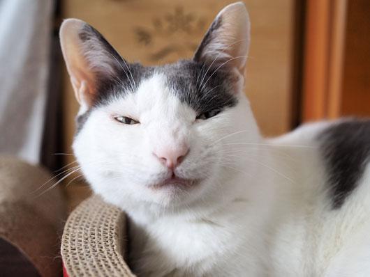 ブサ顔の猫