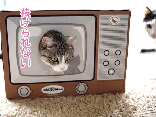 テレビ型爪とぎと猫