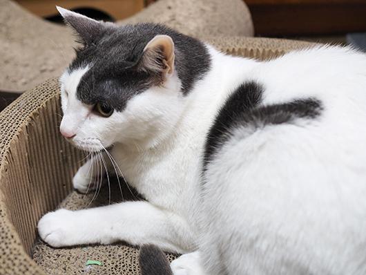 ハートマークの猫