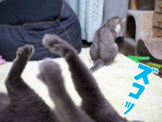 ズッコケる猫