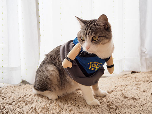 こどもの日の猫