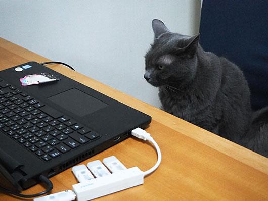 仕事中の猫