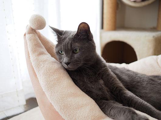 猫ベッドでくつろぐ猫