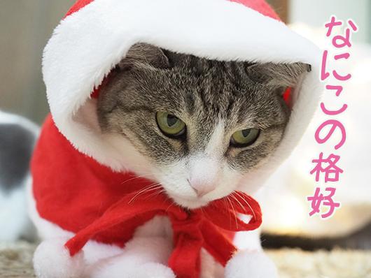不満顔な猫