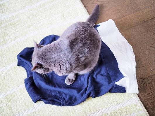 服の上に乗る猫