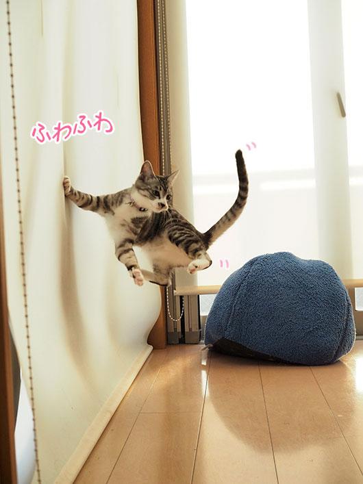 無重力の猫