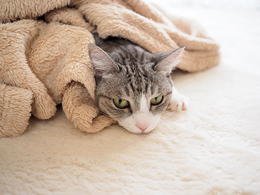 毛布の中の猫