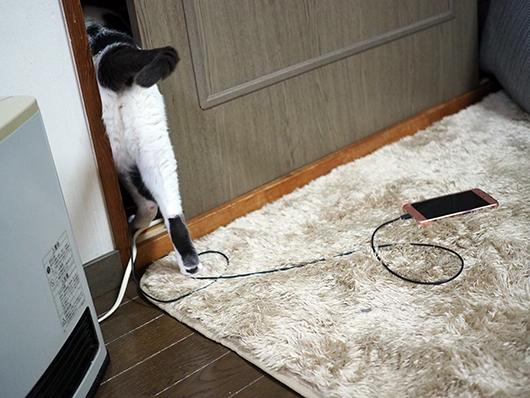 隙間を通り抜ける猫