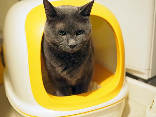 トイレをする猫