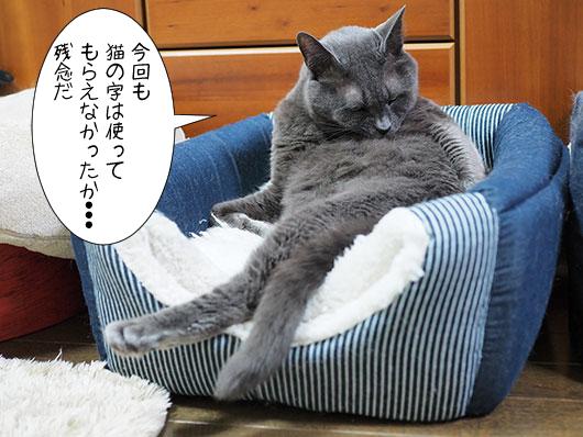 偉そうな猫
