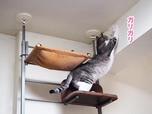 壁をガリガリする猫