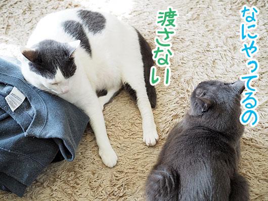 洗濯物を独占する猫
