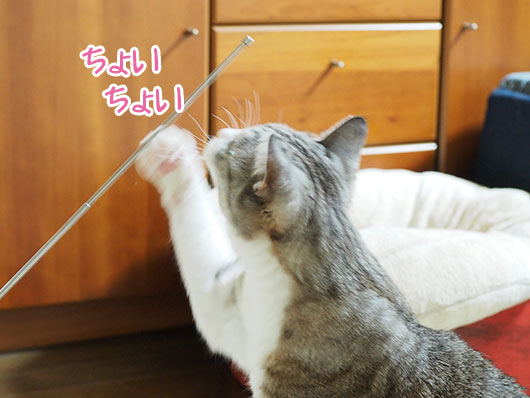 イタズラ猫