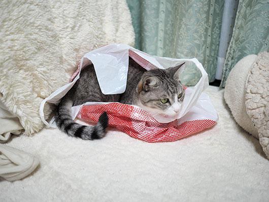 しまむら猫
