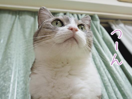 サバ白の猫