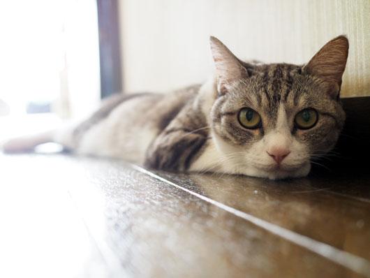廊下に寝そべる猫