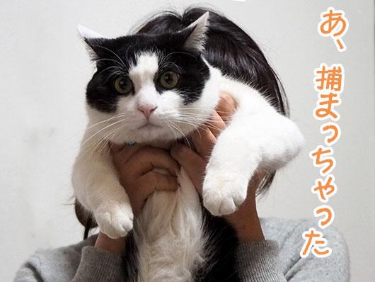 捕まっちゃった猫