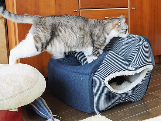 キャットハウスに登る猫