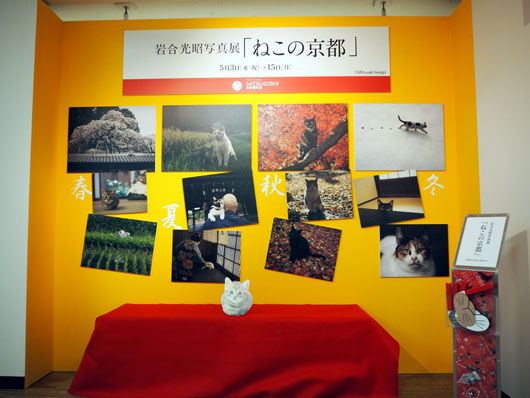 岩合光昭写真館「ねこの京都」