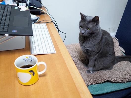 勉強中の猫