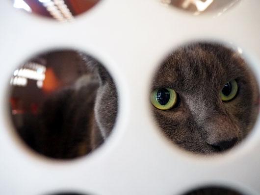 キャリーの中の猫